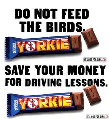 yorkie3